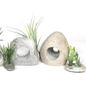 Decoruri/Plante