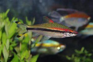 Sfaturi pentru o menținere reușită în acvariu