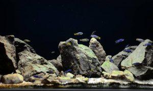 Cum sa realizezi un decor natural in acvariu