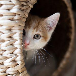 10  Curiozitati despre pisici
