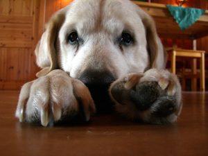 8 motive pentru care să adopţi un câine matur